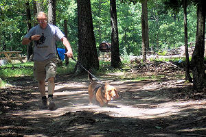 Woodland walking paths at Dogwoods Pet Lodge